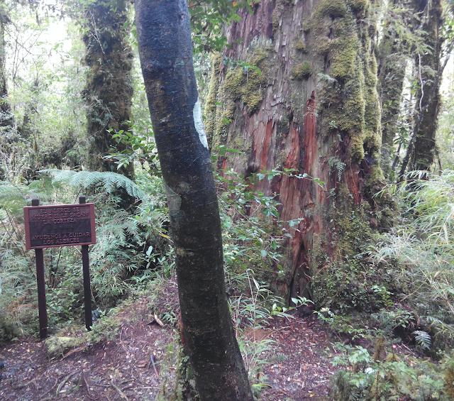 Sendero Cascadas Escondidas, Parque Pumalín, Chile