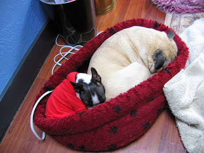 Two dogs in one dog bed