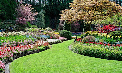 Groundcovers are the Secret to a Low Maintenance but Elegant Landscape