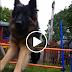 ΒΙΝΤΕΟ: Υπάρχουν 2 τύποι σκύλων...