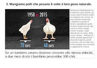 Mangiamo polli che pesano 6 volte il loro peso naturale