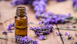 image result lavender oil