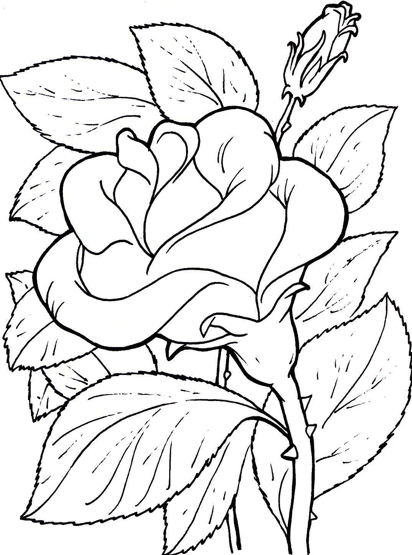 Imagenes De Rosas Sencillas