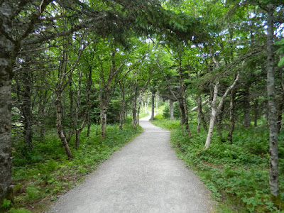 Birch forest at Skyline Trail Cape Breton Highlands National Park by garden muses-not another Toronto gardening blog