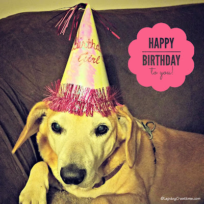 birthday dog senior rescue adopt hound golden lab
