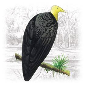 Urubu de Cabeça Amarela