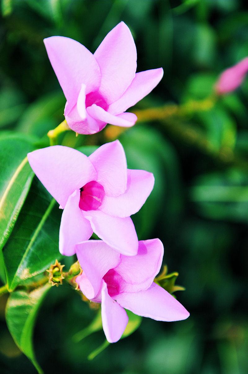 Imagenes Bonitas Con Flores