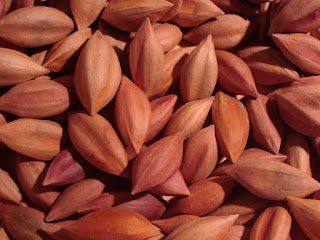 Pili Nut Fruit Pictures