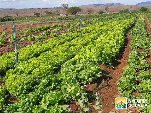 Prefeitura de Delmiro Gouveia  lança edital para aquisição de gêneros alimentícios da Agricultura Familiar