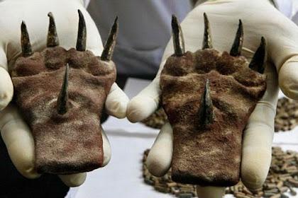 Ritual Pertarungan Kejam Peradaban Moche di Peru