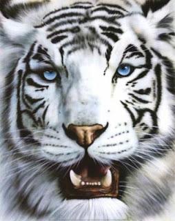 El Animal Invisible Animal Blanco Animal Negro Animal Blanco Y Negro