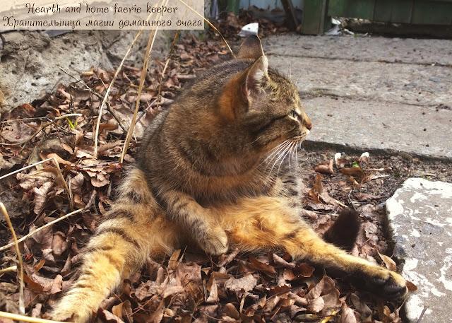 Полосатый рыжий кот обмяк на сухой листве