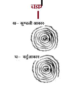 palmistry, jyotish, haath pr chakra ka nishaan