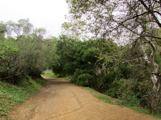 Heading north on Brush Canyon Trail