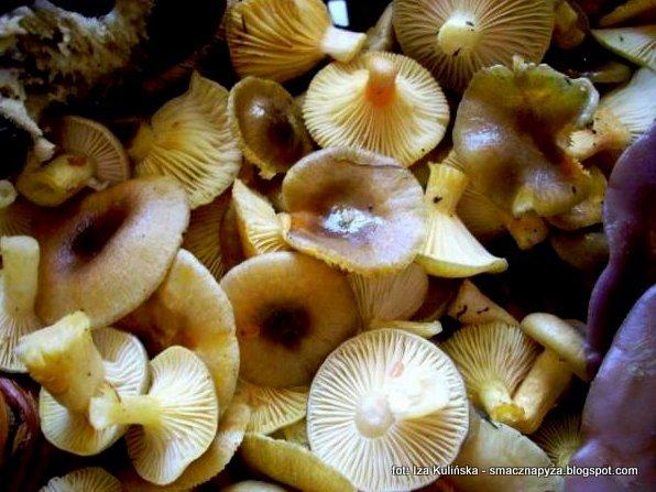 grzyby jadalne, atlas grzybow, zbieranie grzybow, na grzyby, grzyb listopadowy, listopadowka, jesien, jasnozolta, wodnicha pozna, sos grzybowy