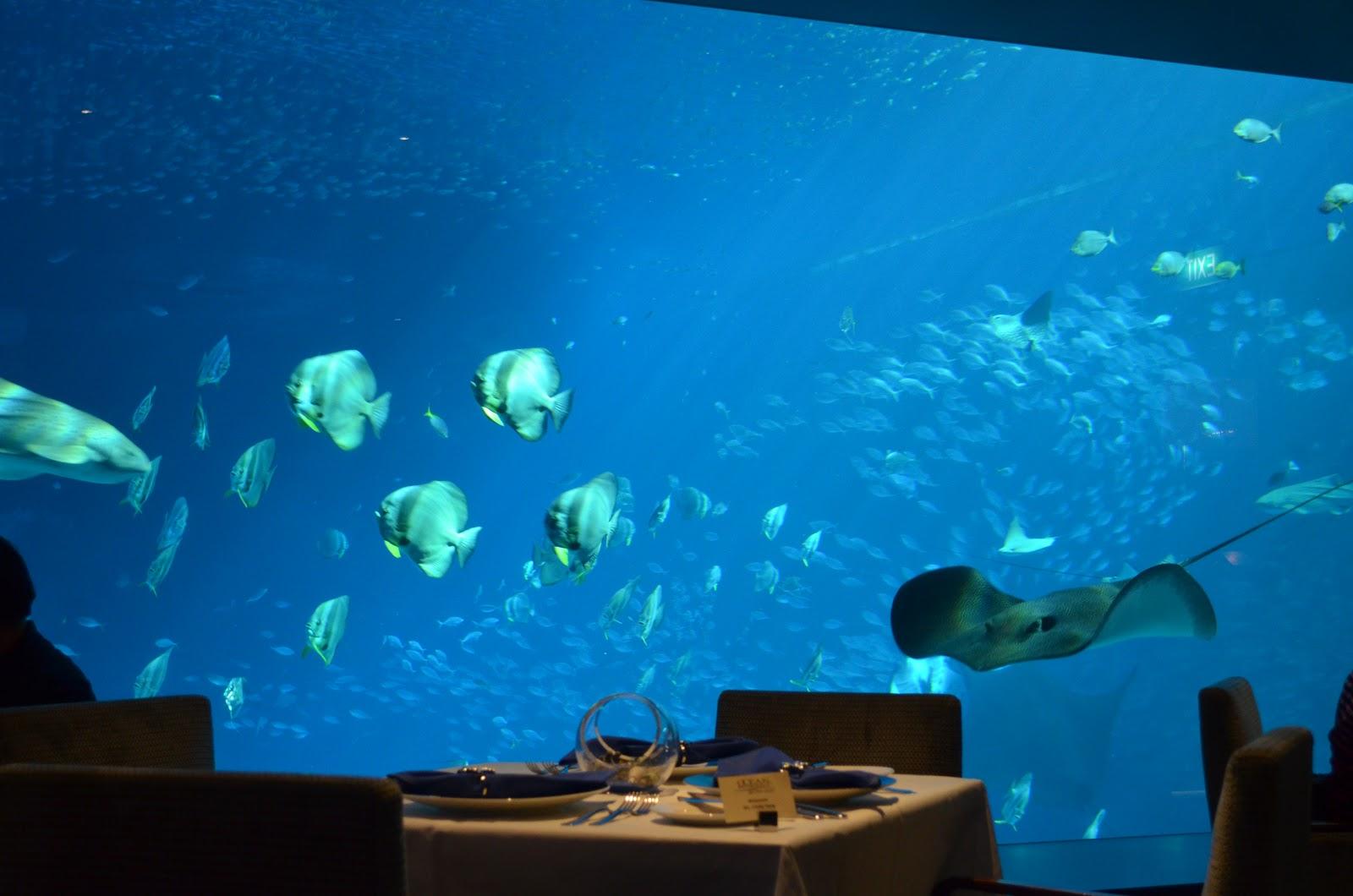 Hotel Near Sea Aquarium Singapore Tiket Ocean Restaurant By Cat Cora S E A Jacqsowhat