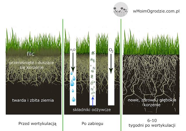 przekrój przez glebe trawnik
