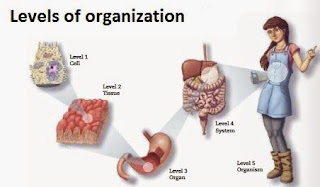 cells, tissue, organs and systems, 5th grade