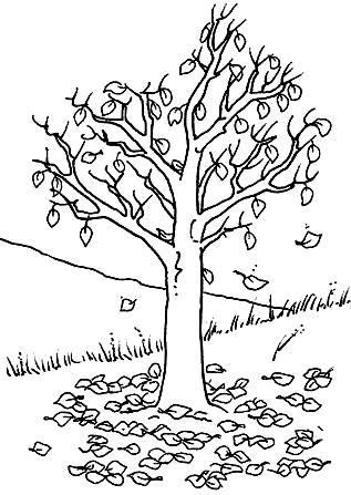 Dibujo de un árbol en otoño para colorear o pintar