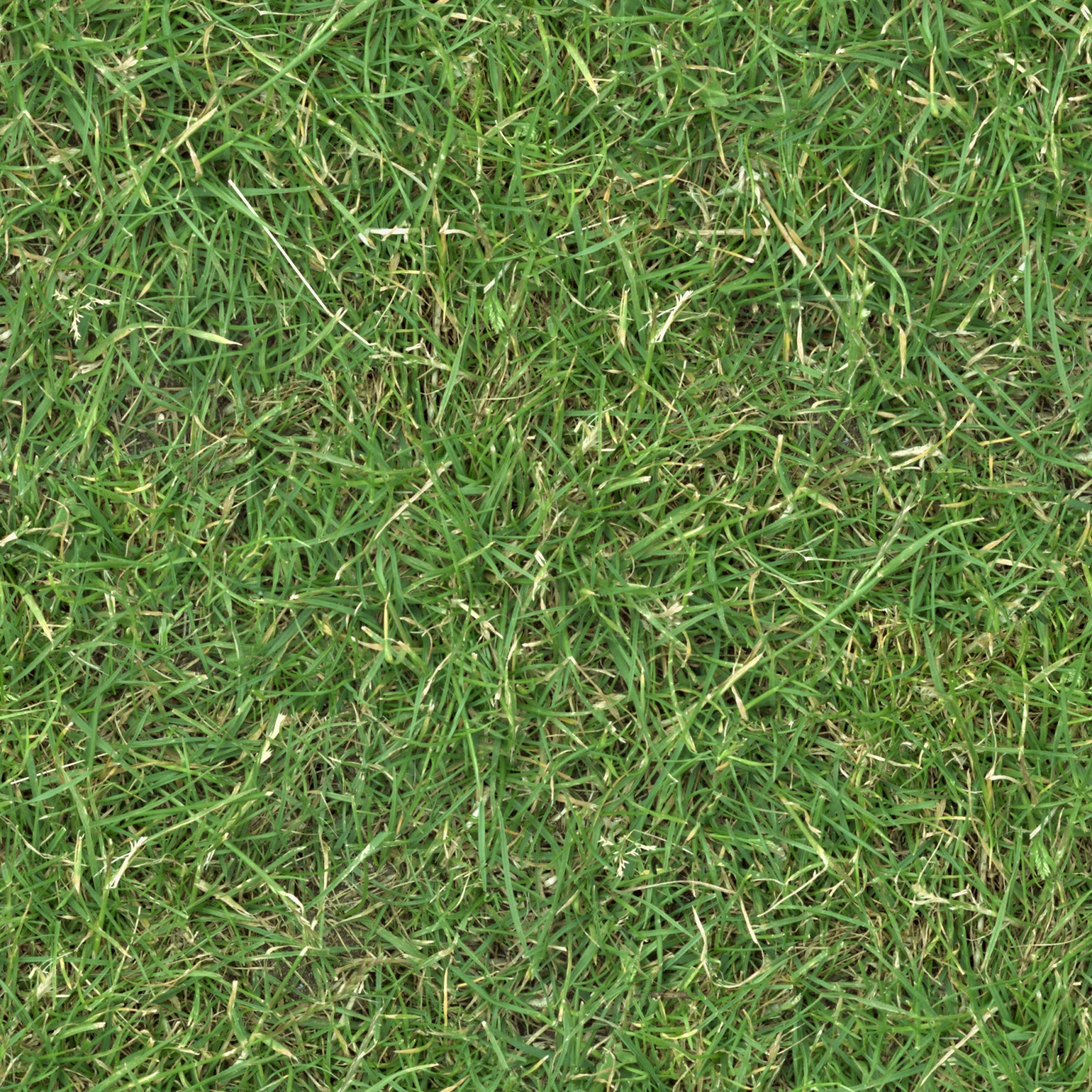 Grass turf lawn green ground field seamless texture 2048x2048