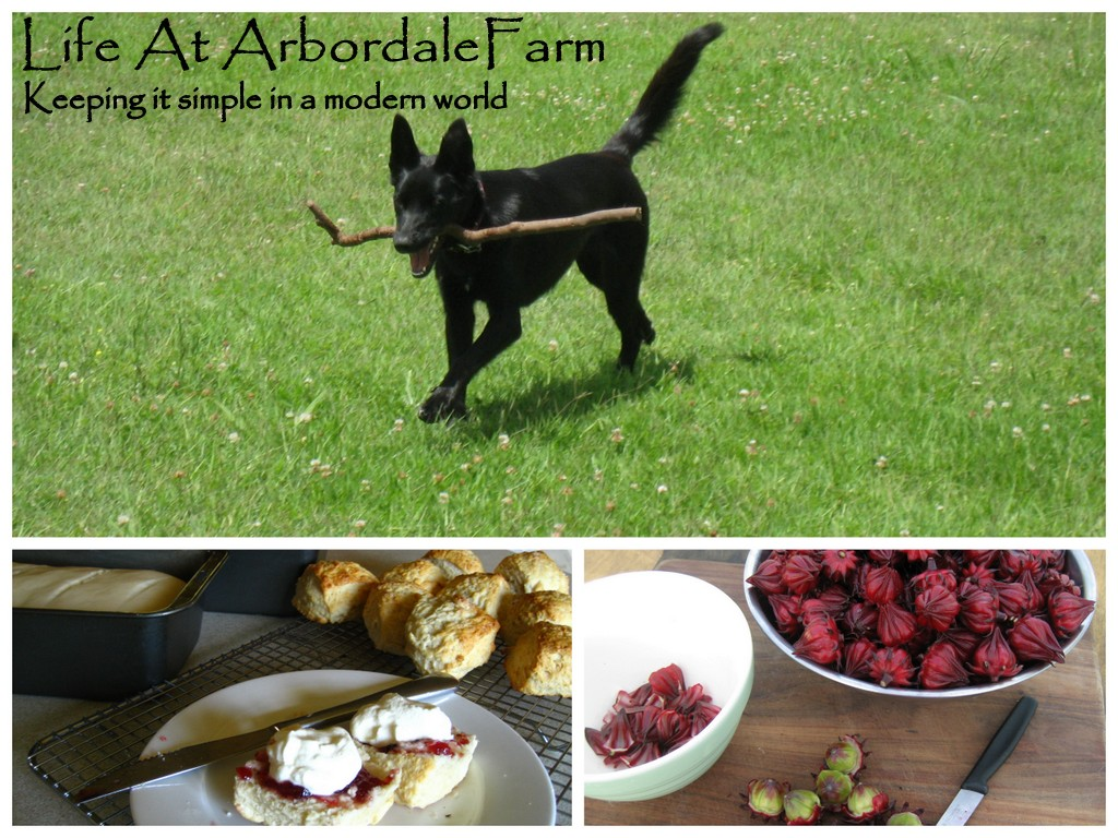 Life at Arbordale Farm