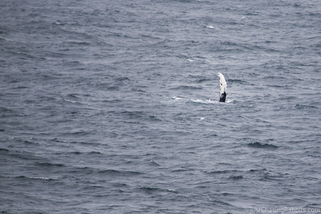 A whale waved to us as our ship sailed past.