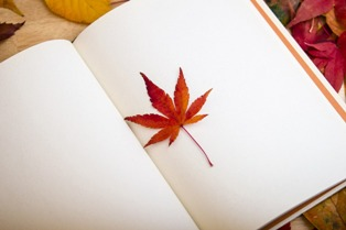 foto di libro con foglia dentro