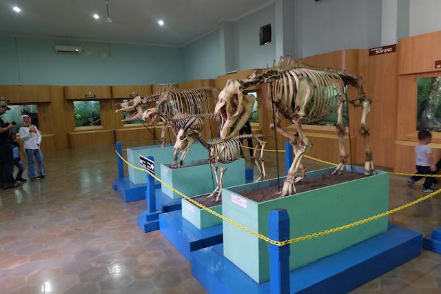 museum zoologi kebun raya bogor