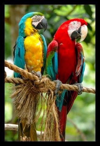 Burung Kakaktua Christiansanonymousinfo