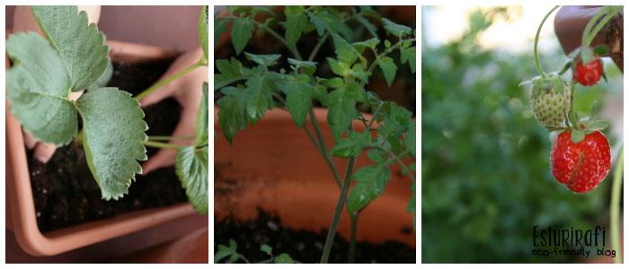 Una terraza llena de plantas aromáticas, fresas, tomates cherry, pimientos de Padrón y Pimientos de Ourense.