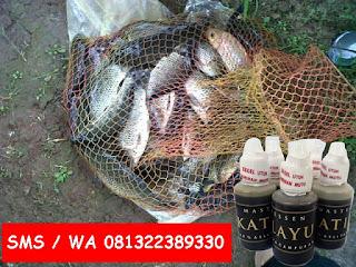 Essen Getah Katilayu Campuran Umpan Ikan Mas