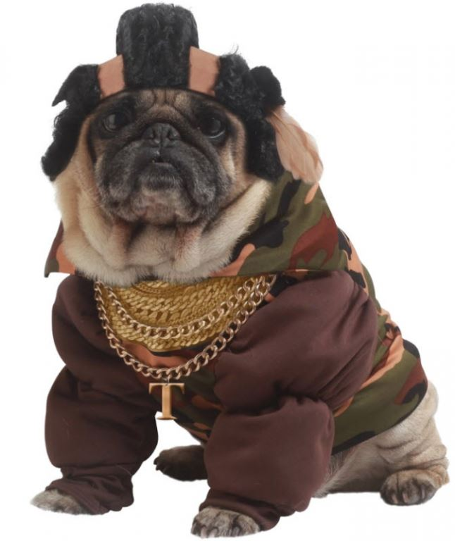 Unique Halloween Express Costumes For Dogs