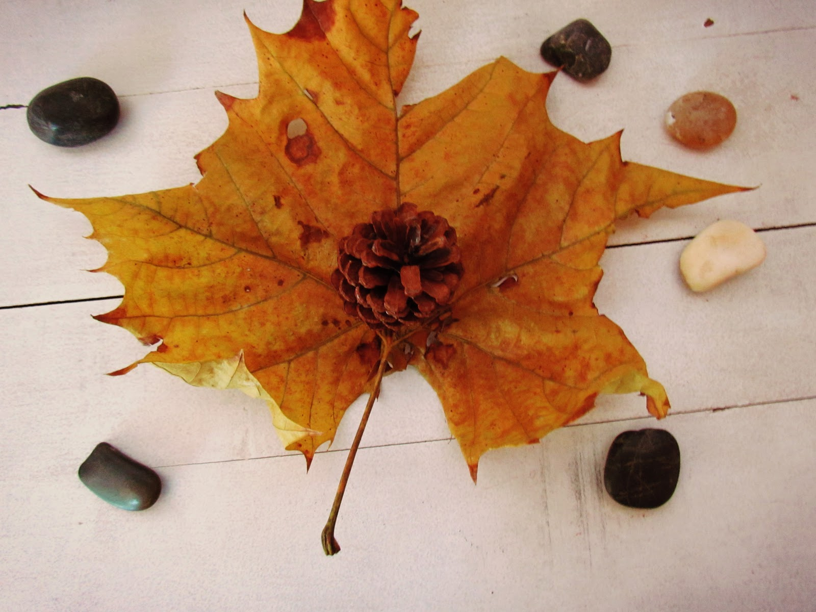 Rustic Golden Fall Leaf + Rocks Flat Lay Display and Pinecones
