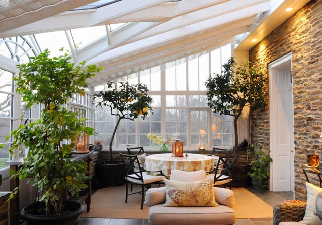 fruit trees indoors, lemon trees