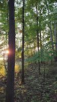 Hunting Ohio Whitetail Deer