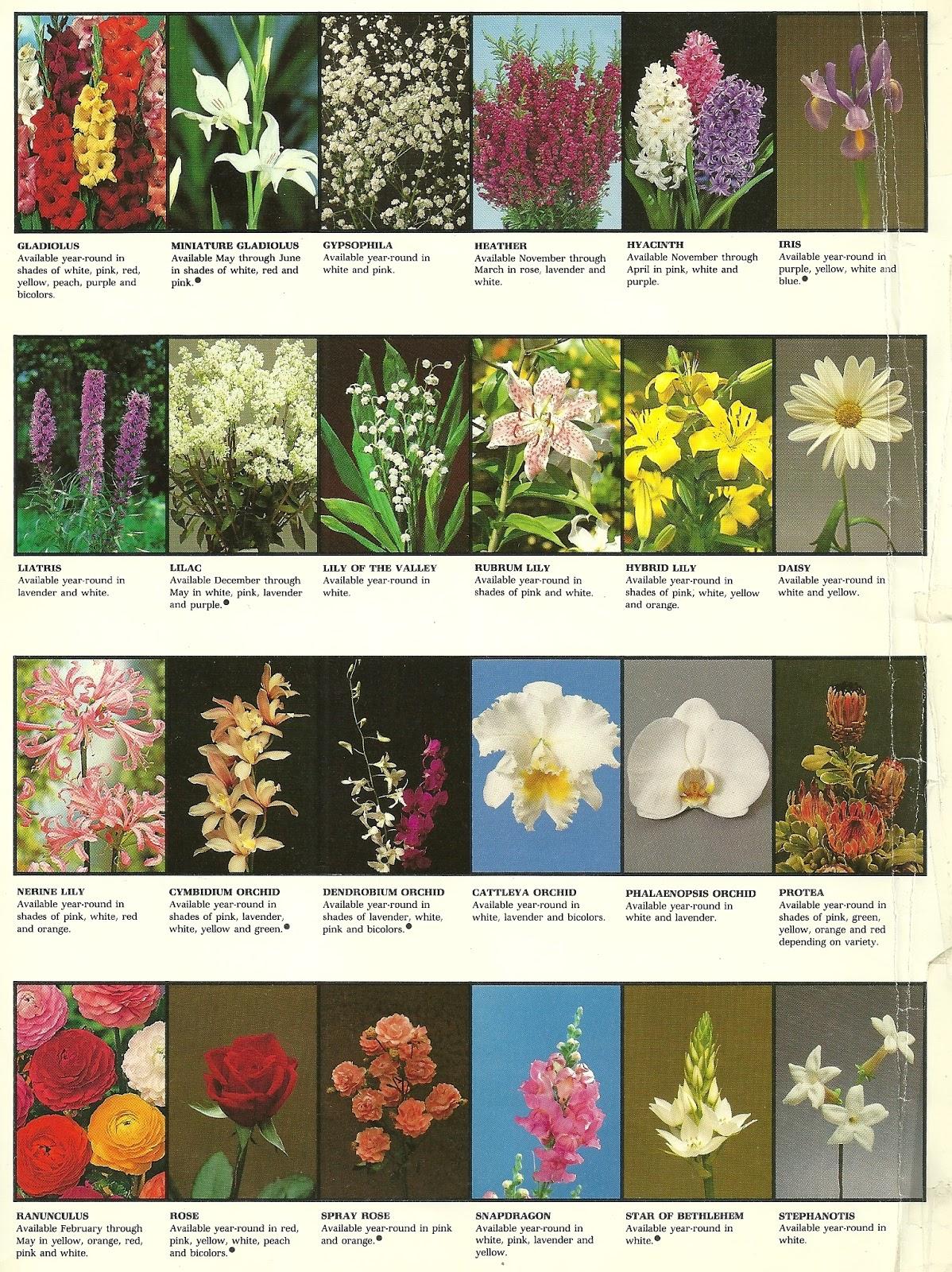Siamgodh las flores y sus nombres - Clases de flores y sus nombres ...