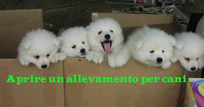 aprire un allevamento per cani