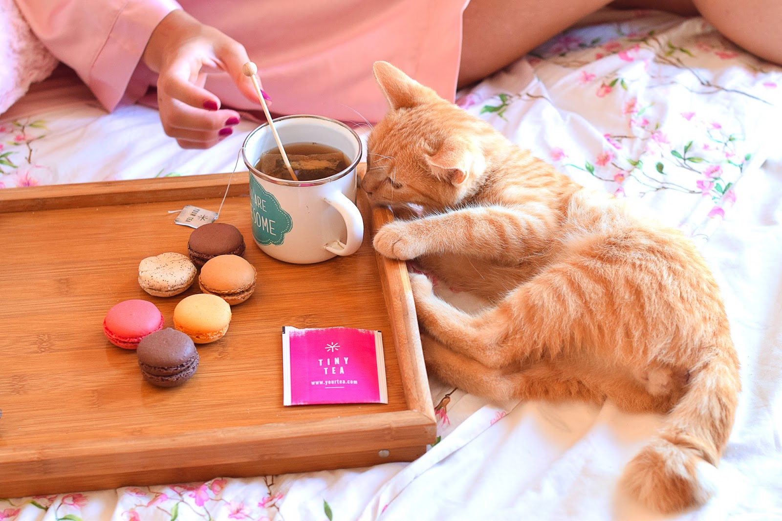 nery hdez, yourtea, tinyteatox, lifestyle, cat, gatito, celulitis, cellulite attack, asos fashion finder