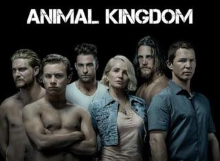 Download Animal Kingdom Season 3 Complete 480p All Episodes