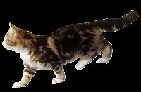 Gato andando png