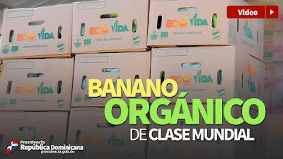 VIDEO: Banano orgánico de clase mundial
