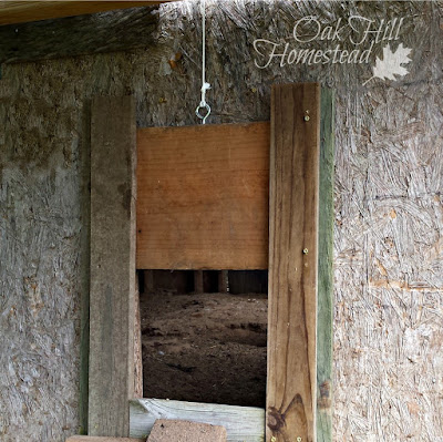 Look for weak spots, such as the bottom of this pop door to the coop.