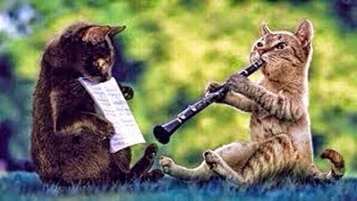 Two cats play music instrument funny animal photos