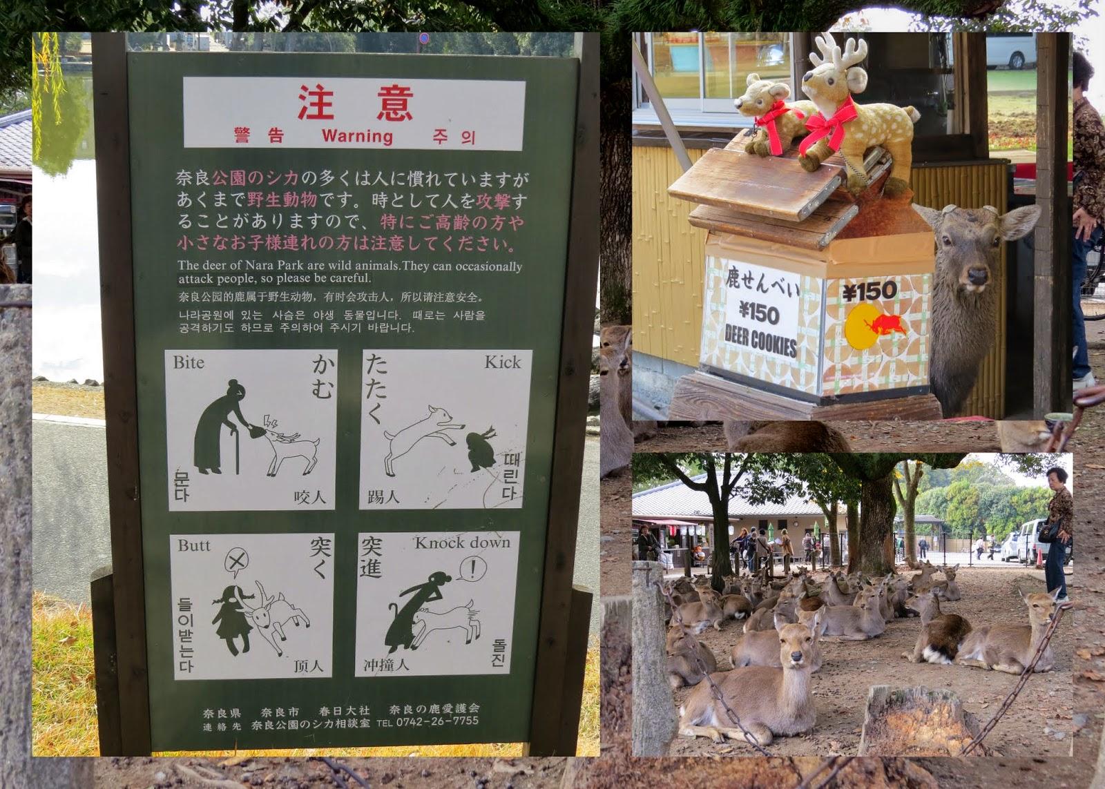 The Deer at Nara, Japan