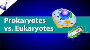 http://www.dunia-mulyadi.com/2016/12/perbedaan-sel-prokariotik-dan-eukariotik.html