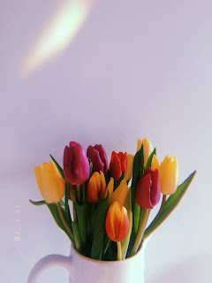 multicoloured tulips shot on huji app