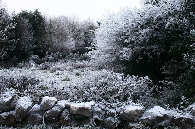 frosted vegetation in Oughterard