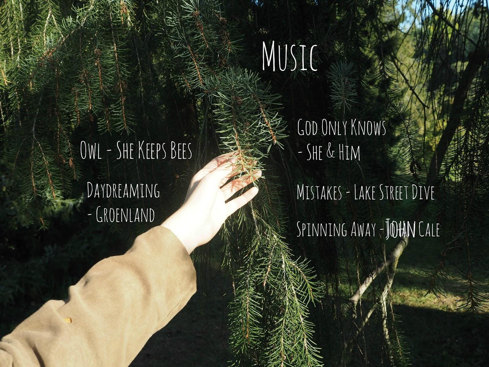 Nature 39 s wonders pumpkin soup tea and music - Lake street dive mistakes ...