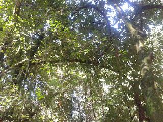 Floresta Amazônica características e recuperação de carbono