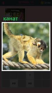 вдоль каната идет обезьяна на высоте